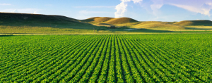 Disponible estudio de ARSChile sobre la agricultura chilena al 2030