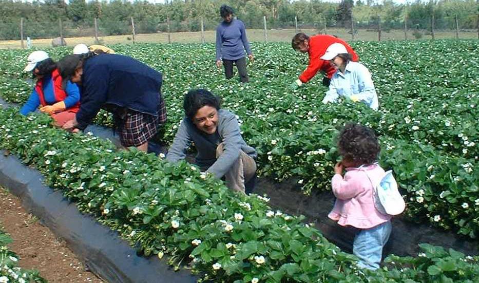Evaluación Resultados del Programa Mujeres Rurales Fundación PRODEMU